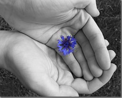 Photo of hands holding a flower. Symbol of hope.